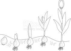 Znalezione obrazy dla zapytania kolejne etapy wzrostu tulipana Jar, Drawings, Spring, Home Decor, Note Cards, Plants, Decoration Home, Room Decor, Sketches