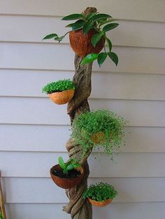 Vine Planter Coconut shells attached to a vine for a naturally beautiful vertical planter. Garden Crafts, Garden Projects, Garden Art, Garden Beds, House Plants Decor, Plant Decor, Coconut Shell Crafts, Garden Frogs, Garden Junk