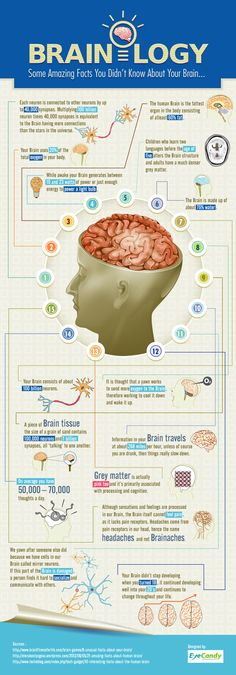 Brainology 15 Intriguing Facts About Your Brain [Infographic] is part of Science Facts Neuroscience - This brainology infographic will give you 15 facts that you probably didn't know about your brain They might increase the creativity of your imagination Brain Facts, Facts About The Brain, Brain Science, Science Education, Physical Education, Education Galaxy, Education System, Nutrition Education, Speech Therapy