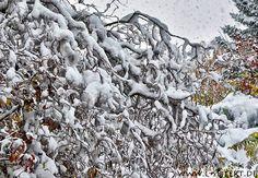 Winterbilder mit Schnee auf Bäumen