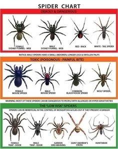Giant and scary spiders in Australia where they eat snakes. Never going to Australia lol.