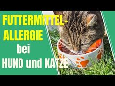 Food allergy in dogs and cats – How to make an exclusion di … - Cats and Dogs House Cat Tags, Cats For Sale, Sphynx Cat, Care About You, Food Allergies, Cat Food, Pets, Cool Cats, Dog Cat