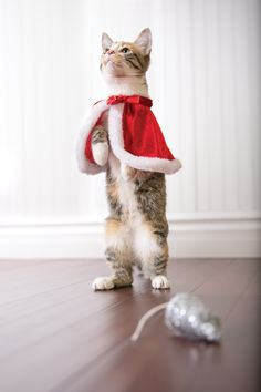 Dress your cat to impress this holiday with a Christmas cape for the holidays from PetSmart. #givethanks