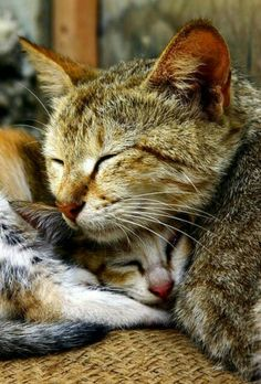 Cat Perspective / Love