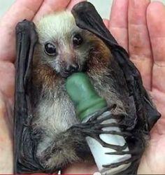 Bats - A Rescuers Production — Bats_Rule! Help Save WildLife