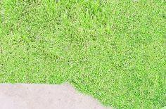 grass substitute