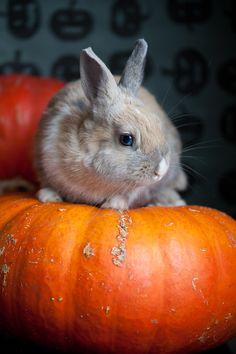 hoppy halloween | www.kellysteenlandt.com