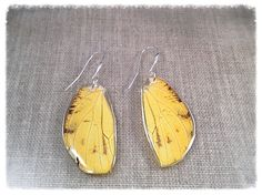 Real Butterfly Wing Jewelry Statement Earrings by JBirdsPerch Insect Jewelry, Butterfly Earrings, Butterfly Wings, Yellow Earrings, Wing Earrings, Statement Earrings, Butterfly Species, Bird Perch, Yellow Black