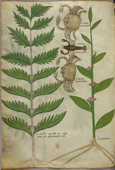 Miniatures of plants, crabs, and [most likely] a lobster-like animal [versus a scorpion as captioned at the source site]. #miniature