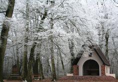 Le Gros Chêne - Haguenau - #Alsace