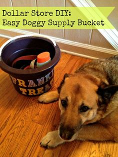 Organization Tips and DIY Dog Stuff Storage Bucket  . Posted this because it looks like Tristram! <3 @Gwyneth Campbell