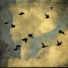 ..I would love a tattoo of a little black bird!!