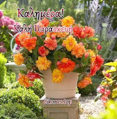 Greek Quotes, Happy Friday, Good Morning, Plants, Buen Dia, Bonjour, Plant, Good Morning Wishes, Planets
