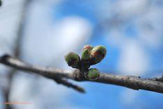 Gaby's Worlld: Cadre de primăvară