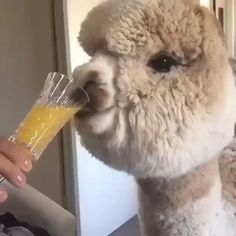 Pretty Animals, Cute Little Animals, Animals Doing Funny Things, Funny Animals, Pictures Of Insects, Funny Animal Videos, My Animal, Animal Kingdom, Fur Babies
