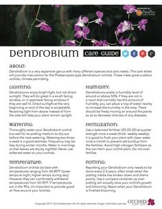 Dendrobium orchid care guide. Free from OrchidPlantCare.info.
