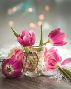 Good Morning Picture, Morning Pictures, Good Morning Wishes, Good Morning Images, Good Morning Quotes, Buddy Holly, Pink Tulips, Amazing Nature, Pretty Flowers