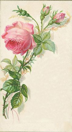 Still in search of the vintage wallpaper with roses that was on my bedroom walls as a child. This pattern is close. Images Vintage, Art Vintage, Vintage Ephemera, Vintage Pictures, Vintage Cards, Vintage Paper, Vintage Postcards, Vintage Prints, Graphics Vintage