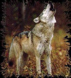 wolf! :)