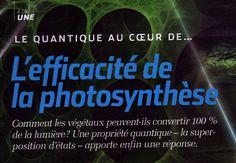 Effets quantiques et biologie