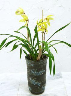 """【楽天市場】【和蘭 """"おぼろ月"""" 信楽焼の和柄陶器植え】:花と観葉植物のChouchou,te"""