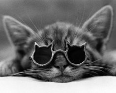 Awwwwww...It's time for Shades of Kitty  <3