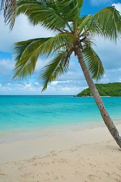 Tobago Cays....been there!