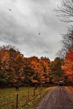 hello autumn the curious bumblebee : Photo Autumn Cozy, Autumn Forest, Autumn Rain, Autumn Leaves, Autumn Aesthetic, Aesthetic Green, Aesthetic Girl, Autumn Scenery, Autumn Photography