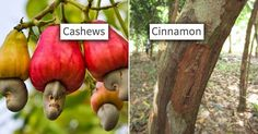 11 Photos That Prove You Have No Idea How Food Grows #food #nature #MindBlown