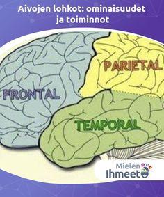 Aivojen lohkot: ominaisuudet ja toiminnot   Aivojen lohkot. Kaikki mitä olemme, on aivoissamme. Tämä hämmästyttävä ja äärimmäisen monimutkainen elin heijastaa lajimme menestyksekästä kehityshistoriaa.