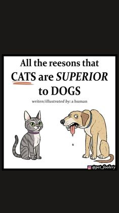 Funny Animal Jokes, Cute Funny Animals, Stupid Funny Memes, Funny Laugh, Hilarious, Funny Picture Jokes, Funny Cat Pictures, Funny Images, Cute Comics