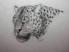 Leopard by LuccisArt