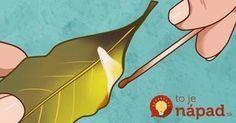 Nikdy by sme neverili, čo sa môže stať, ak doma zapálite obyčajný bobkový list!
