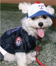 I have a puppy named Kinsler and I'm quite certain that he needs this outfit!
