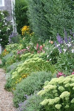 mix of catmint and sedum with salvia and cone flowers or apple blossom yarrow along the the fence
