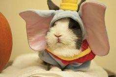Dumbo Darling