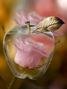 A clear apple w/ a PINK rose inside, absolutely beautiful! Beautiful Roses, Beautiful Flowers, Beautiful Pictures, Tout Rose, Everything Pink, Flower Wallpaper, Cute Wallpapers, Pink And Gold, Glass Art