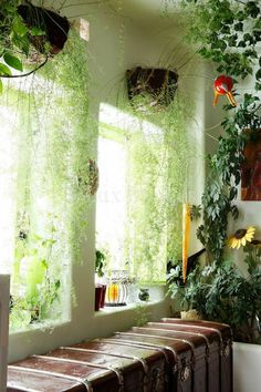 Apartment balcony curtains DIY plants 35 ideas - All About Balcony Indoor Window Plants, Hanging Plants, Plantas Indoor, Decoration Plante, Room With Plants, Sun Plants, Nature Plants, Diy Curtains, Balcony Curtains