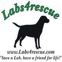 Adopt a dog!  Jackson's Rescue <3