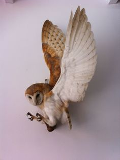 Taxidermy Barn Owl , Bird of prey . | eBay