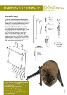 Nesting boxes for mammals: owls and gr . - Nesting boxes for mammals: Haringsee owl and bird of prey station - Bat House Plans, Bat Box, Vegetable Garden Design, Nesting Boxes, Grow Your Own Food, Garden Boxes, Birds Of Prey, Bird Houses, Bird Feeders