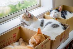 Living at its best - box seats for Cat TV (Cats don't need fancy beds--they love their boxes!)