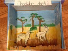 Cheetah Habitat Diorama. No fancy materials just a shoe box paper and paint.