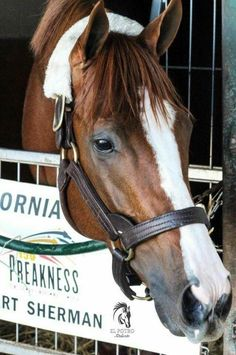 California Chrome.  Handsome boy.