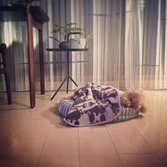 🐶おかえりなさい  が云いたくて ネムネムだけど 待ってるね! オトウタン 💤💤_ 昨夜のワン娘  マージュ ・ 私の方が遅い日は  とっとベッドインしてるのに⁈_ のに!  のに… ・ 夫曰く しょうがないよ 愛嬌はあっても ウラオモテなし はっきりクッキリ態度で伝えるところ おまえさん似だよ! … ・ ・ #今日のわんこ #犬の家族 #愛犬 #犬と暮らす #いぬのいる暮らし #いぬのきもち #お父さんが大好きなワン娘 #正直なワン娘  #私に似たワン娘 #ネムネムなワン娘 #まもなく11歳 #シニア犬 #犬 #いぬ #トイプードル  #ふわもこ部 #いぬバカ部 #poodle #toypoodle #dogphotography #dogstagram #dog #dogphoto  #dogoftheday #todayswanko #instadog