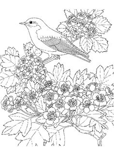 Birds - 999 Coloring Pages