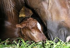 foaling, stress foaling, horse foaling, brandenburg state stud, christina nagel, christine aurich