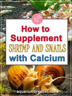 How to Supplement Shrimp and Snails with Calcium  Dwarf shrimp, freshwater crabs, crayfish, snails, diet, food, feeding, care, maintenance, problems, treatment, molting, growth.