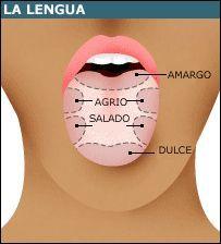zonas de la lengua que distingue los sabores