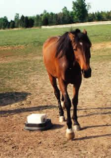 Dealing with rude behavior. Natural Horse Magazine